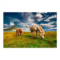 Άλογα σε βοσκή
