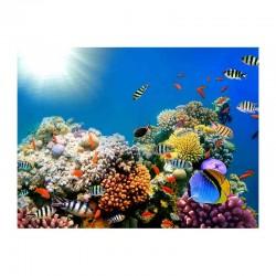 Οι κοραλλιογενείς ύφαλοι