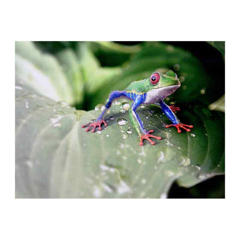 Εξωτικός κοκκινομάτης  βάτραχος