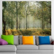 Καταπράσινο δάσος σε μια ηλιόλουστη μέρα