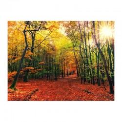 Φθινοπωρινός περίπατος στο δάσος
