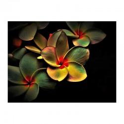 Χρωματισμένα άνθη