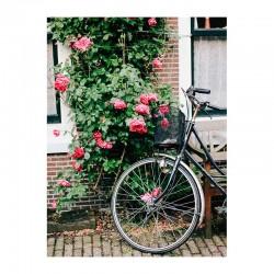 Ποδήλατο σε αυλή